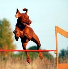 agility-jump