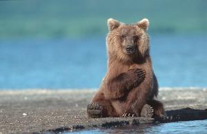 bear-medve-4447799304_cc02df78a6_o