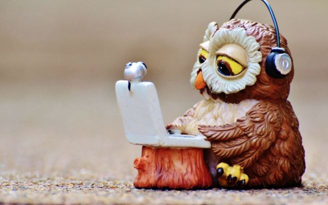 distant-learning-owl